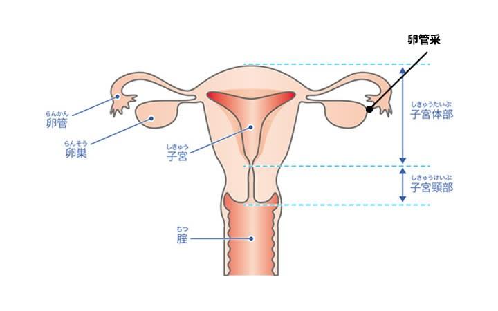 卵巣腫瘍とは?卵巣腫瘍によって起こる卵巣の痛みと治療について
