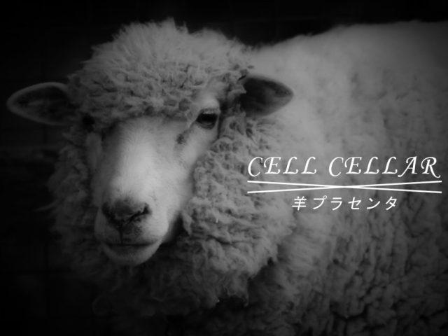 羊プラセンタのご紹介|CELL CELLARについて